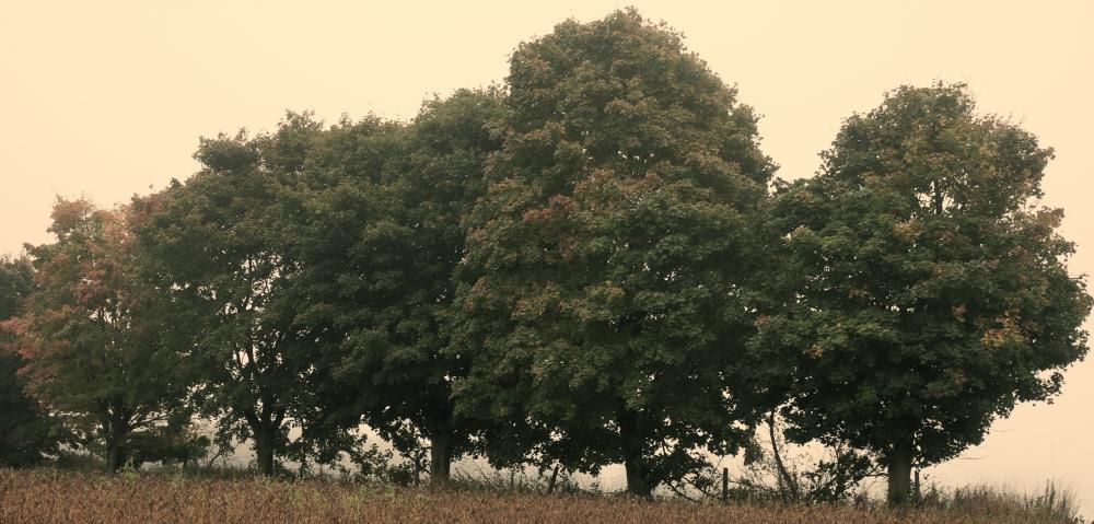 treesnew