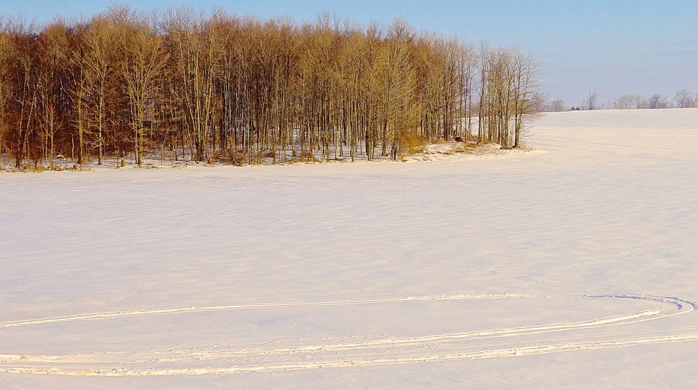 snowmobileTrees