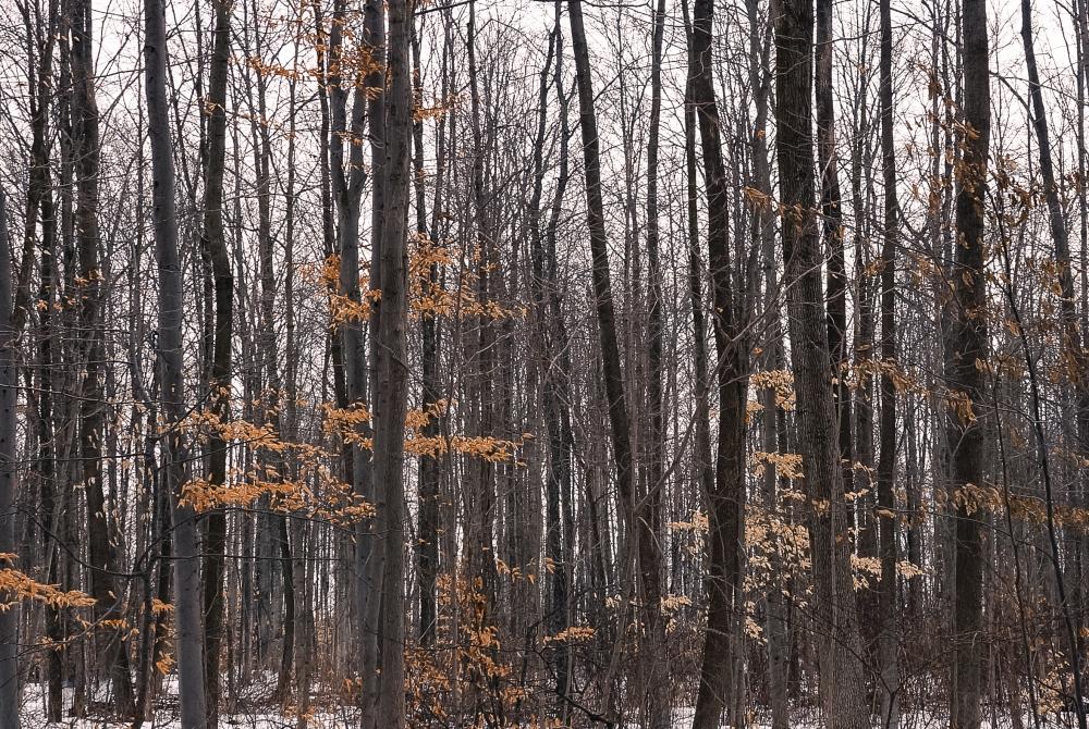 TreesMore-15