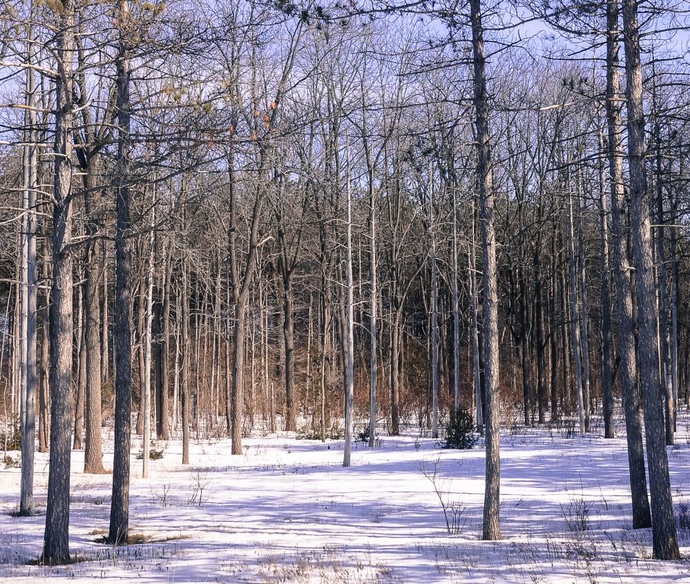 TreesMore-7