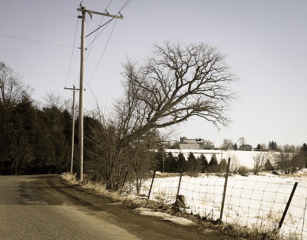 TreesMore
